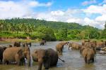 Тайны Шри Ланки